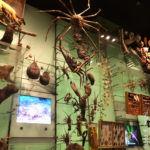 New York - Ingresso del Museo di Storia Naturale (esposizione insetti)