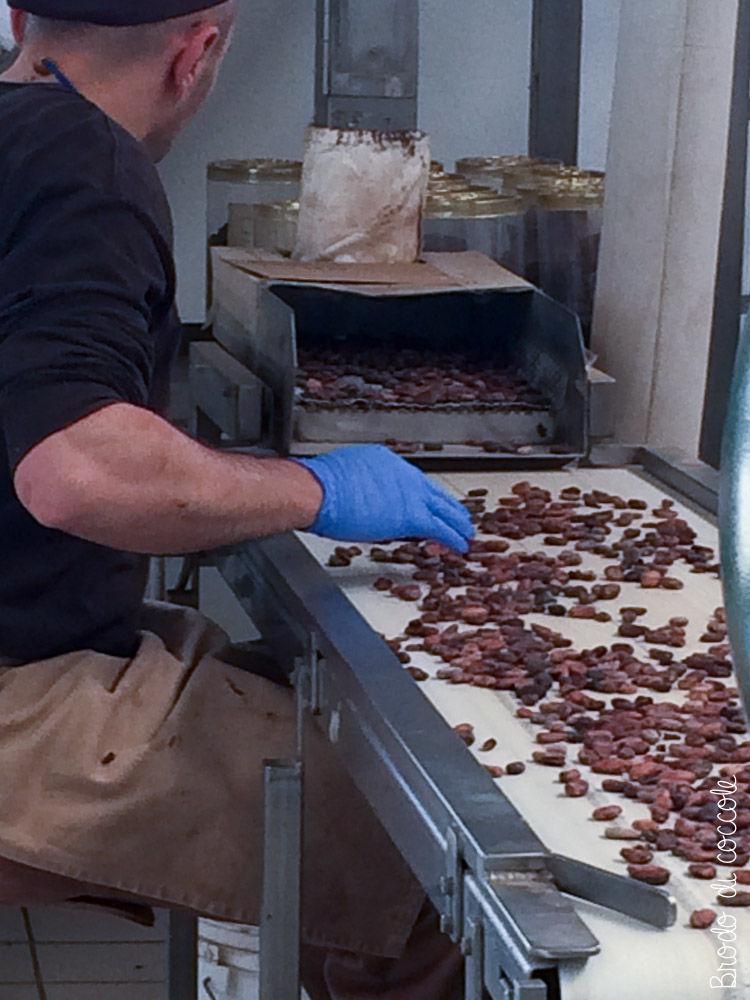 Pastiglie Leone - Selezione delle fave di cacao